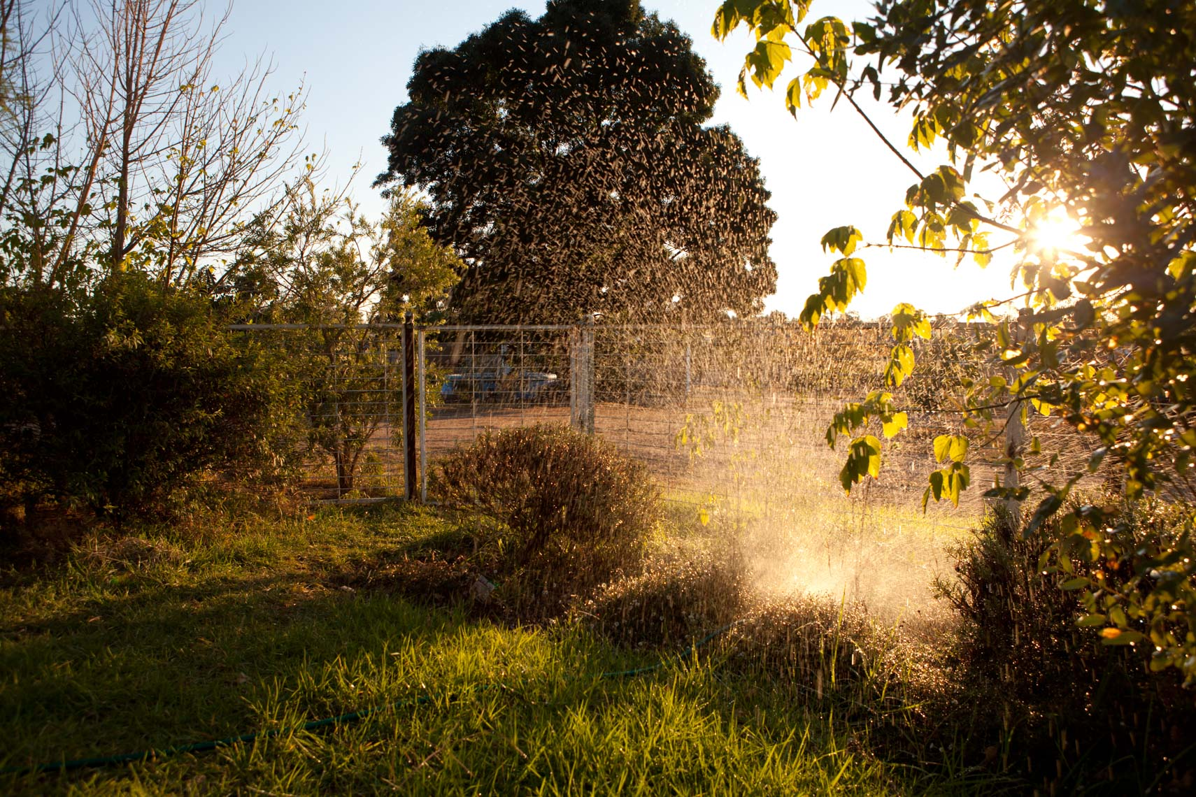 22_WEB_Landscapes_05_Sprinkler_1558_10